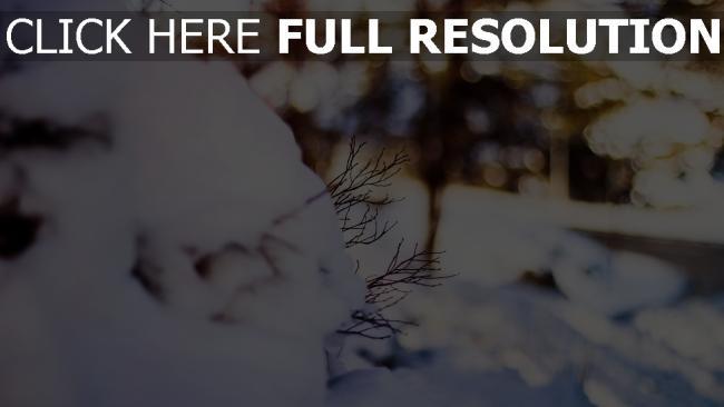 hd hintergrundbilder winter schnee zweig bokeh