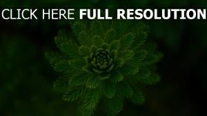 schachtelhalm pflanze gras unschärfe
