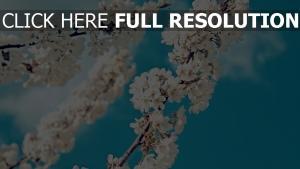 frühling blühen weiße blüten zweige himmel