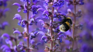 blauen blüten stängel blüten hummel insekt