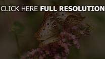 rosa blumen schmetterlinge insekten flügel muster