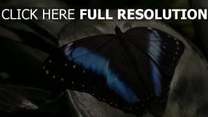 schmetterling rock flügel schwarz blau