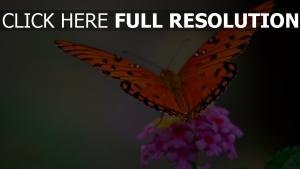 rosa blume schmetterling flügel insekt