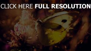 blumen blüten klee schmetterling flügel