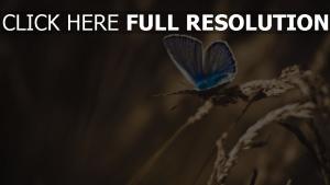schmetterling flügel blau gras unschärfe
