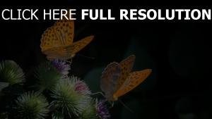 schmetterling distel dornen insekten