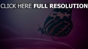schmetterling flügel lila hintergrund unschärfe