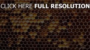 zelle erhöhung honig hintergrund