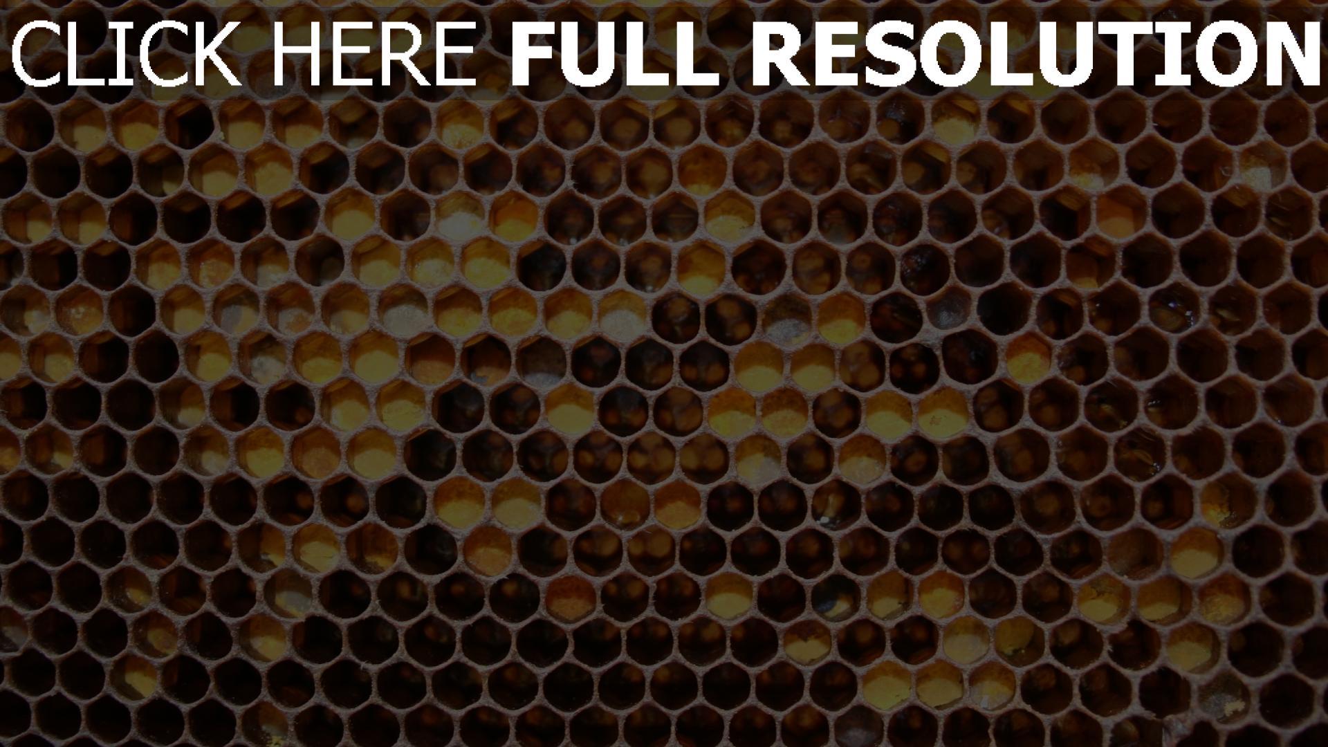 Hd Hintergrundbilder Zelle Erh 246 Hung Honig Hintergrund
