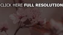 weiße blüten zart frühling blüte staubblatt