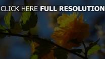 zweig gelbe blume licht frühling