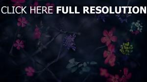 zweige blumen rosa blau unschärfe