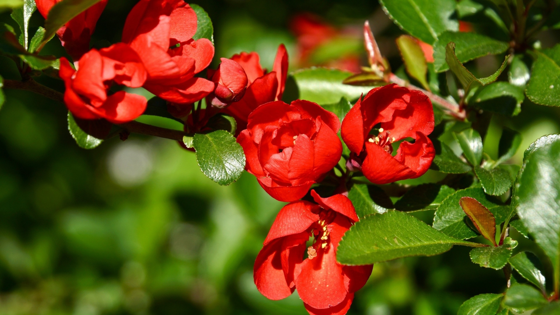 Beautiful pictures of flowers desktop