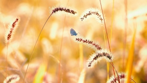 sommer gras Ährchen schmetterling sonnig