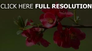 blüte frühling rosa blüten zweig