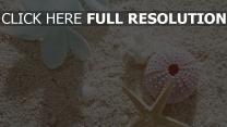 sand seestern blumen muscheln