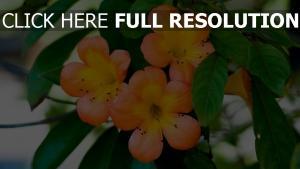 blumen orange blätter blüte