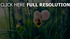 blume blütenblätter gras tau bokeh