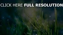 gras glanz strahlen licht grün