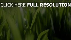 gras grün licht sonnenstrahlen