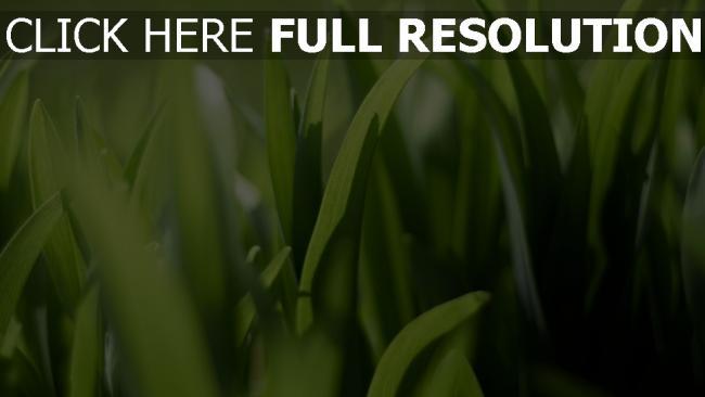 hd hintergrundbilder gras grün licht sonnenstrahlen