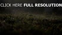 gras spinnweben wiese tau strahlen sonne
