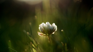 gras blumen blütenblätter klee frühling