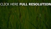 gras wiese vergrößerung grün