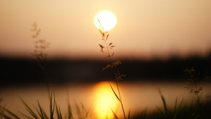 sonnenuntergang gras blur sonne