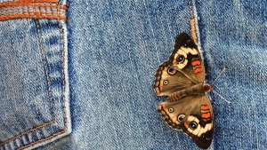 schmetterling jeans tasche stoff