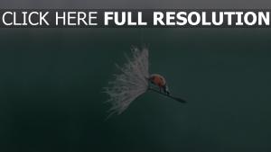 marienkäfer löwenzahn flaum fliegen wind