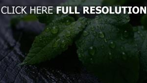 blätter tropfen regen pflanze vergrößerung