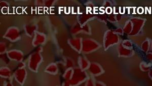 blätter rot schnee frost frieren