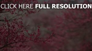 blühen frühling blüten rosa zweige