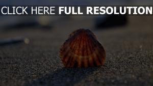 muschel sand strand licht