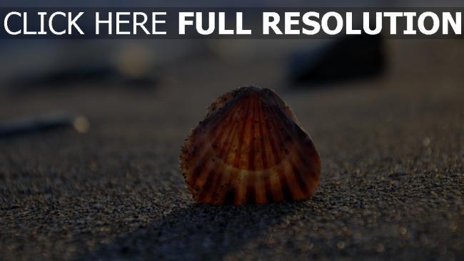 hd hintergrundbilder muschel sand strand licht