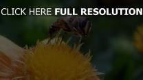 blume nahaufnahme bestäubung biene