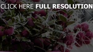 raureif frost winter beeren