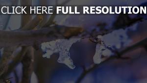 eis winter zweig