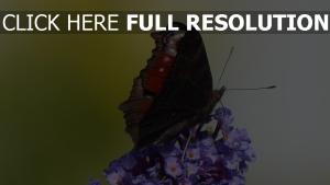 blume close-up wings schmetterling