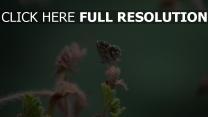 insekt nahaufnahme pflanze schmetterling