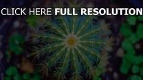 blume dornen kaktus