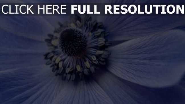 hd hintergrundbilder close up pollen blüten blumen