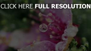 makro tropfen blütenblätter blume