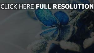 frost schnee hortensie