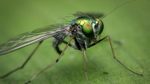 close-up augen insekt