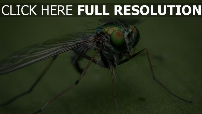 hd hintergrundbilder close-up augen insekt