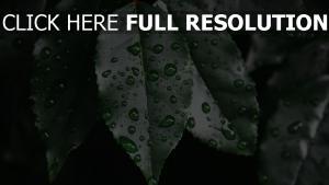 tropfen pflanze blatt