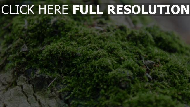 hd hintergrundbilder close-up gras moos