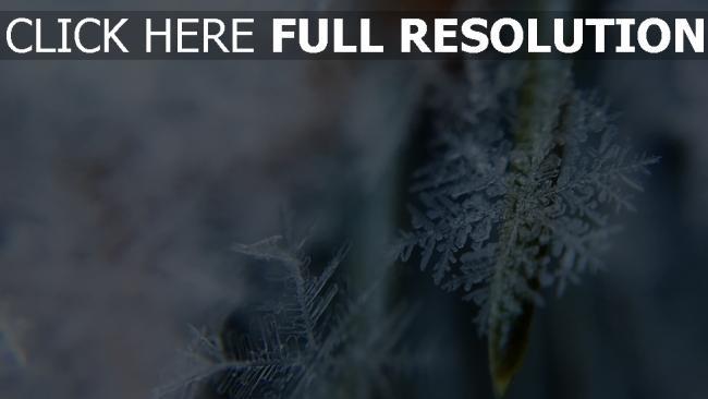 hd hintergrundbilder eis nahaufnahme form schneeflocken